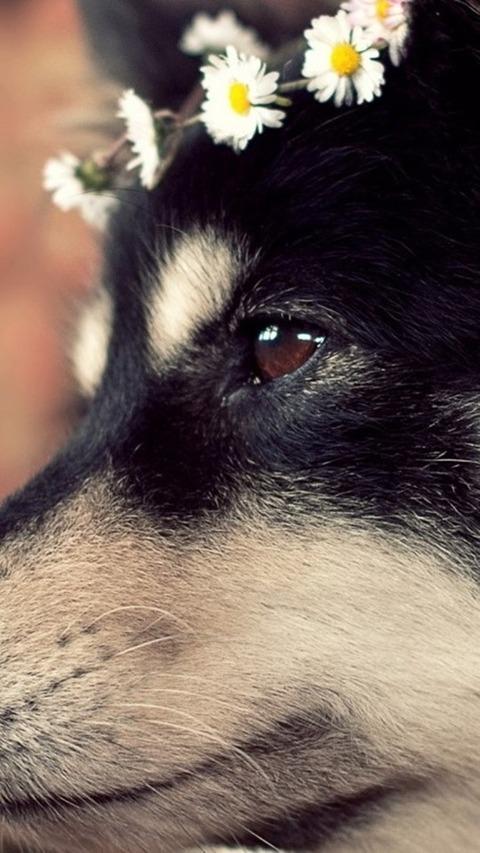 悲しい犬 Cute Dog 2