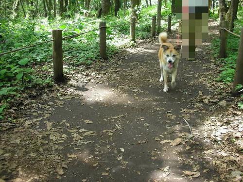 林の中の散歩