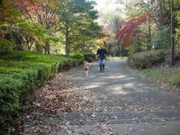 桜ヶ丘公園紅葉2