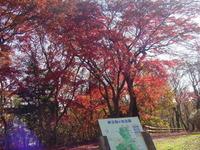桜ヶ丘公園2009年12月