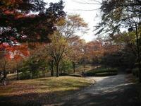 桜ヶ丘公園紅葉1