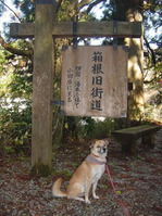 箱根旧東海道3