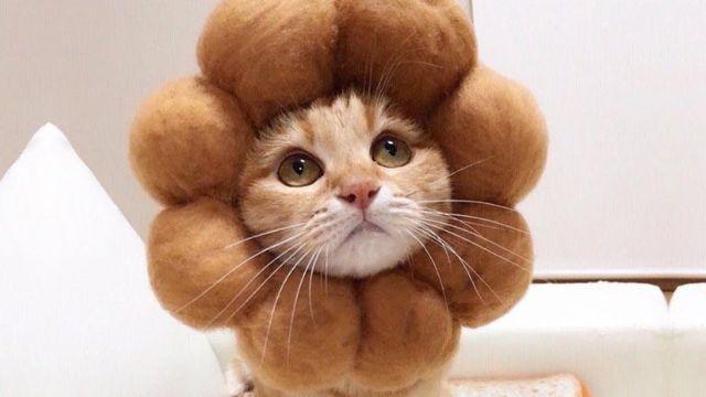 ワイ「『かわいい猫』で検索したろ。きっと1番上に出てくる画像はすごくかわいいんやろなぁ」