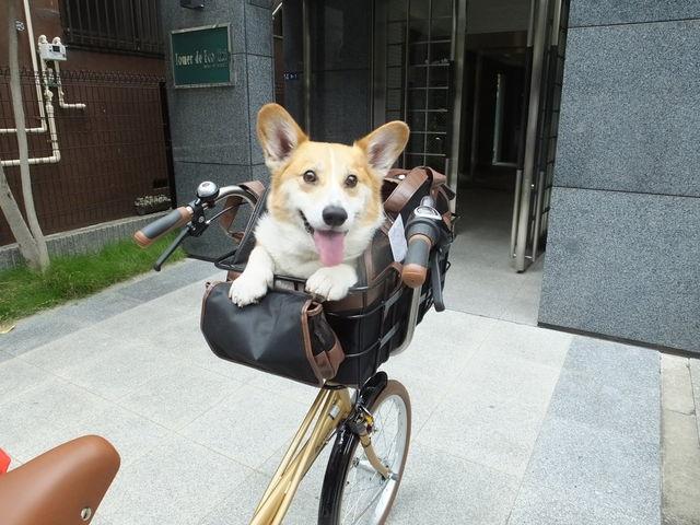 【犬】ペット乗せ自転車総合【わんこ】