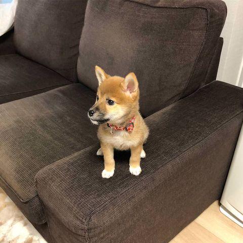 イッヌ「椅子やんけ!座ったろ!!」