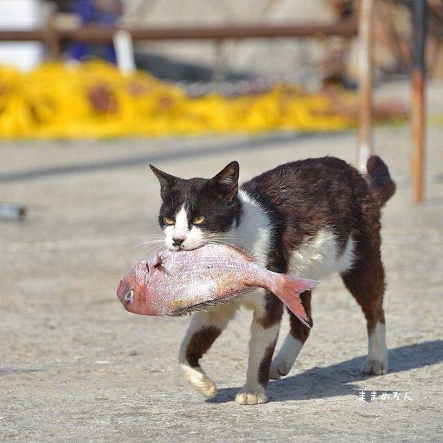 ネッコ「漁師のおっさんにお魚もらったやで」