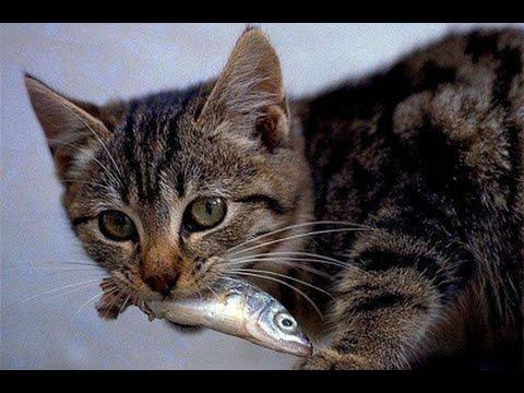 「猫は別に魚が好きなわけではない←これ」