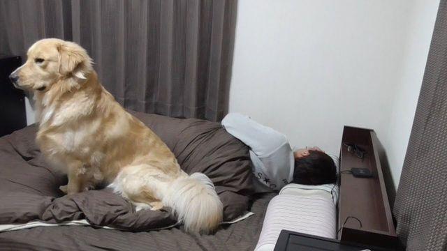 「イッヌといっしょに寝たいんやが」