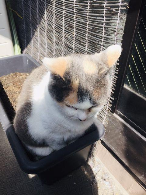 「プランターに猫が生えた!? 思わぬ場所でお昼寝中のニャンコにびっくり」