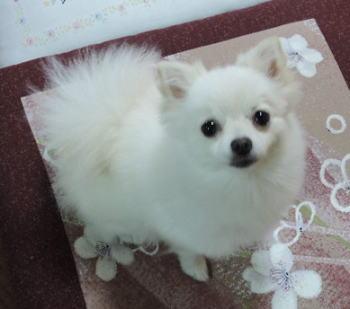blog-pho-036