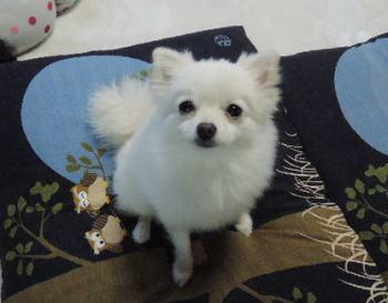 blog-pho-042