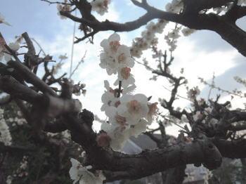 blog-pho-052-3