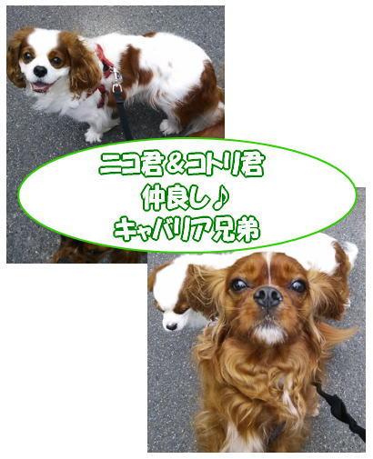 blog-pose-227