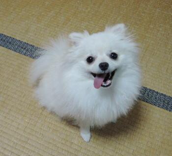 blog-pose-410-1