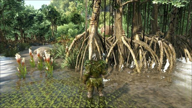マングローブを伐採
