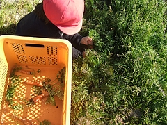 野菜収穫冬の陣 3