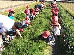 野菜収穫冬の陣 1