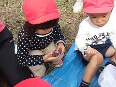 園児の芋堀 1