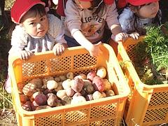 野菜収穫冬の陣 2