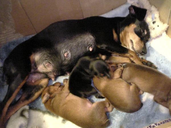 1st babies 094