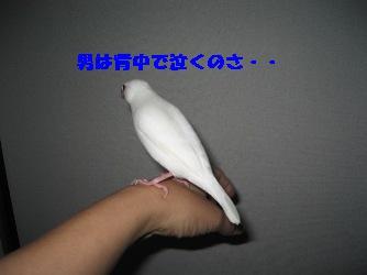 ぴーちゃん2