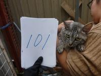 101�餤��
