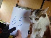 65なっつ