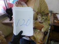 120くっきー