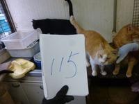 115みみ