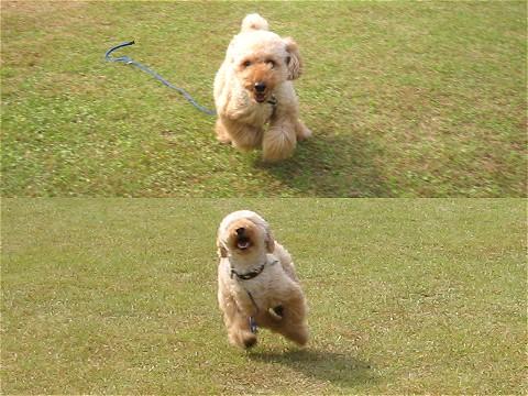 芝生で疾走!