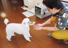 pet_story_15su_01
