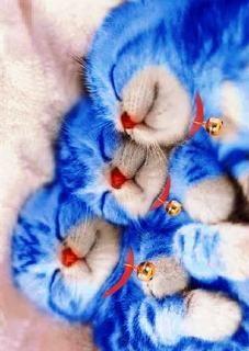 http://livedoor.blogimg.jp/waosoku/imgs/5/0/50ddca63.jpg