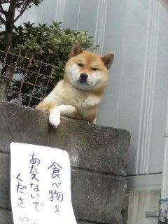 http://livedoor.blogimg.jp/waosoku/imgs/b/3/b3804eed.jpg
