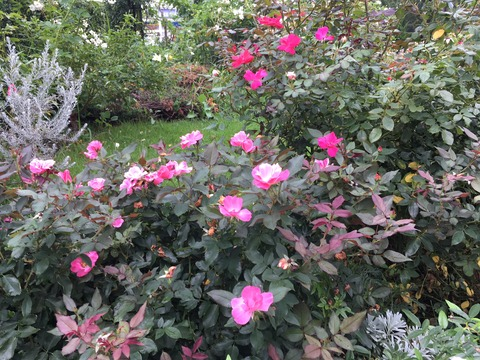 秋の花 (2)