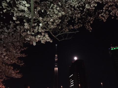 2017年隅田川の夜桜