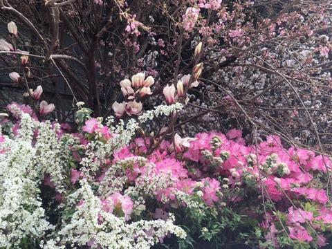 2017年春の花