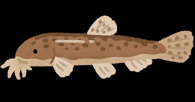 fish_dojou