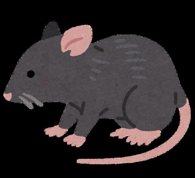 animal_rat_black
