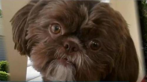 emma-euthanized-dog