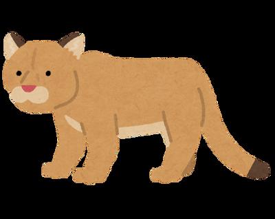 animal_puma