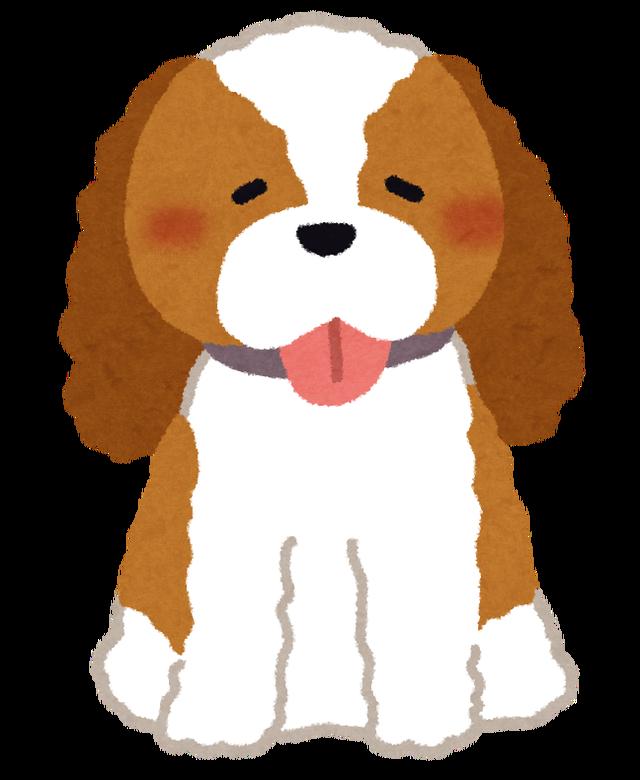 dog_cavalier_king_charles_spaniel