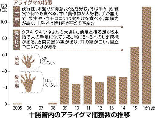 【悲報】害獣アライグマ、北海道で爆増