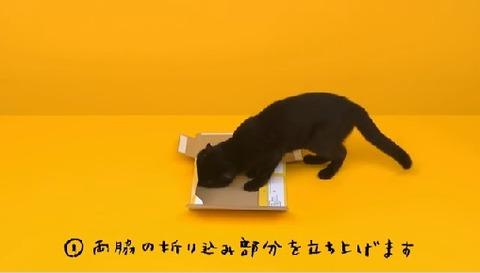 ヤマト、クロネコが箱を組み立てる動画をアップし話題にwwwww
