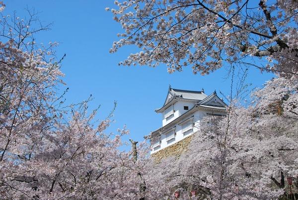 津山城_備中櫓と桜