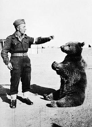 300px-Wojtek_the_bear