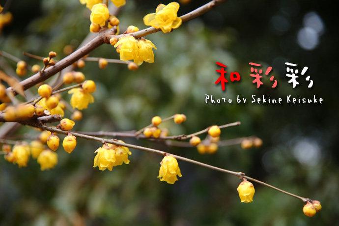 2662春の黄色