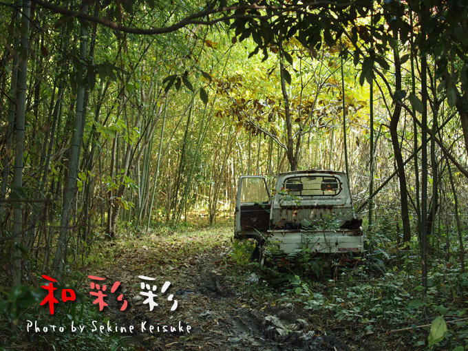 竹やぶとトラック