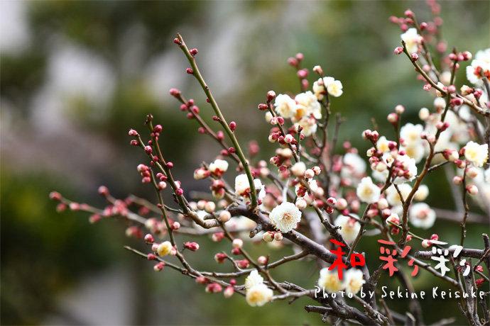 2333春咲き始め