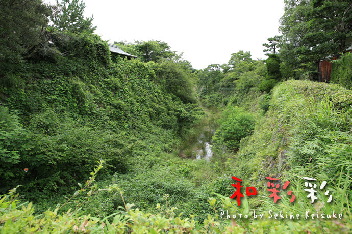 2297お堀のジャングル