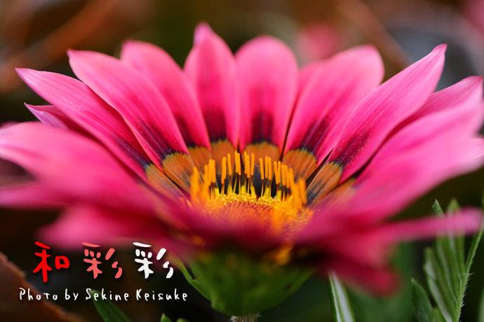 花の中の冠